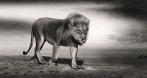 Rio Lion